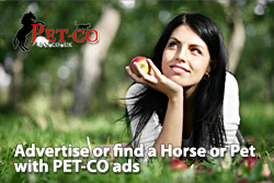 Advertise or find a Horse or Pet with PET-CO ads