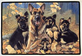 German Shepherd Family, Otter House