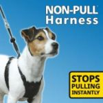 Non Pull Harness, Black, Medium