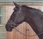 English Heritage Leather Show Bridle, Black