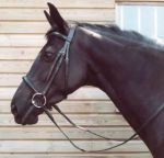 English Heritage Leather Bridle