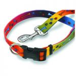 Paws & Bones Collar, Multi